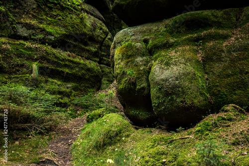 Leinwanddruck Bild Felsen am Fusse der Schrammsteine, Nationalpark Saechsische Schweiz, Elbsandsteingebirge, Sachsen, Deutschland