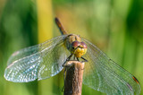 Beautiful dragonfly on the grass - 247744764