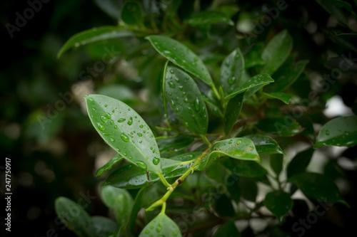 rain drop on green leaf nature