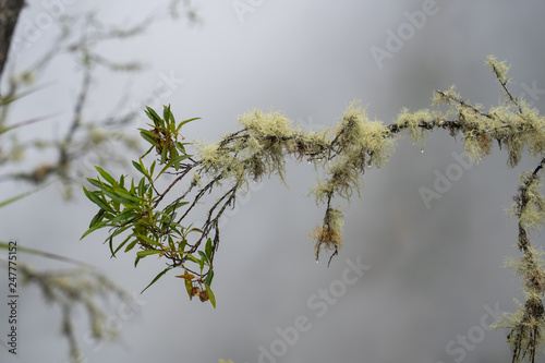 Tree branch with lichens - 247775152