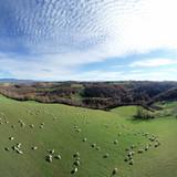 Collina laziale con gregge di pecore al pascolo vista dall'alto - 247799395