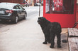 Dog on streets of Brooklyn