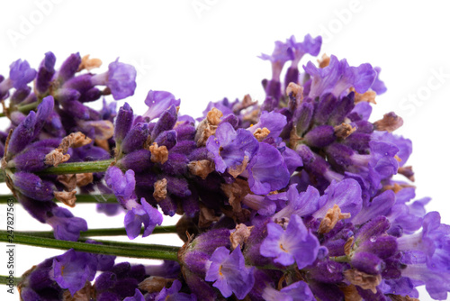 lavender isolated - 247827563