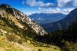 Quadro  forest  mountains landscape