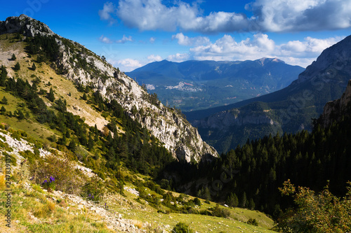 forest  mountains landscape - 247839139