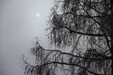 Sun in foggy weather