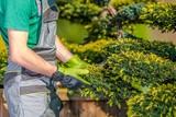Gardener Checking on Plants - 247877521