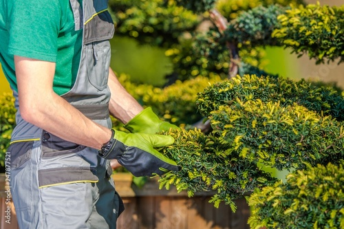 Gardener Checking on Plants - 247877521