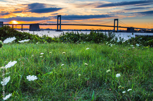 Grass and flowers with Throgs Neck Bridge, New York City at sunset - 247884567