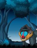 A mandrill in dark forest