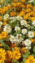 """Постер, картина, фотообои """"Zinnia flower at beautiful garden 555"""""""