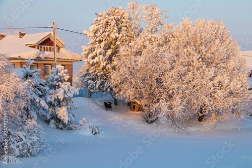 fototapeta na ścianę Arkhangelsk region. Winter in the vicinity of the village Levkovka.