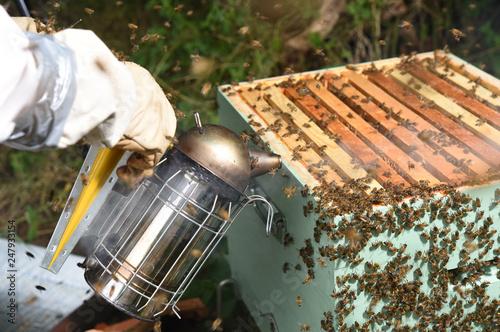 honey harvest on hives - 247933154