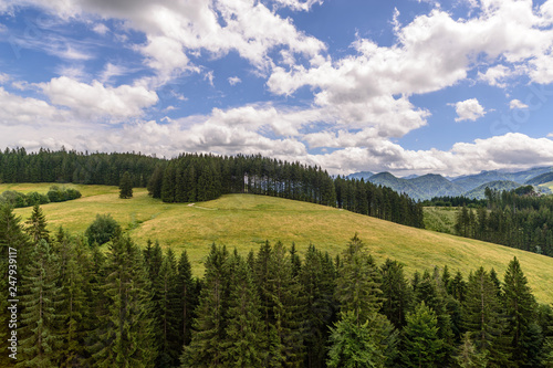 Cows at Grassland, Alm, Alps, Upper Austria