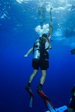 Diving the Red Sea Egypt - 247952361