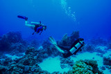 Coral Reef at the Red Sea, Egypt - 247969313