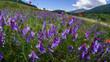 parco nazionale d'abruzzo 2019