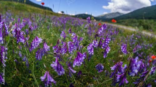 parco nazionale d'abruzzo 2019 - 247986508