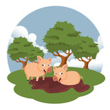 Pigs in the farm scene. Concept for animal farm. Flat vector illustration