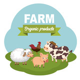 Pigs in the farm scene. Concept for animal farm and organic meat food. Flat vector illustration