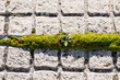 Green moss growing in the space between two floor tiles in Caceres, Extremadura, Spain.