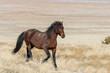 Majestic Wild Horse in the Utah Desert in Winter - 248004555