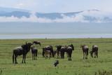 herd of horses grazing in field