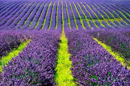 campi di lavanda in provenza - 248005328