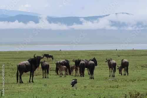 herd of horses grazing in field