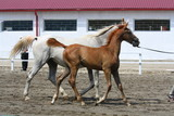 mare and foal - 248011745