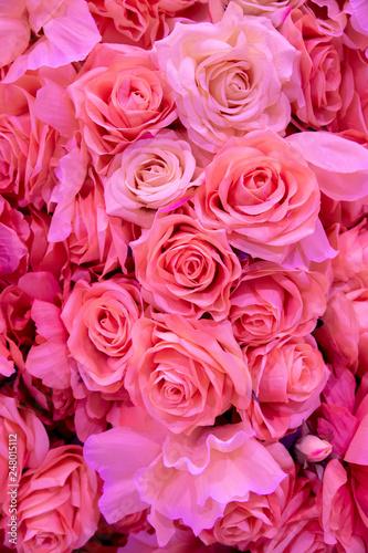 Soft coral pink color Roses Background - 248015112