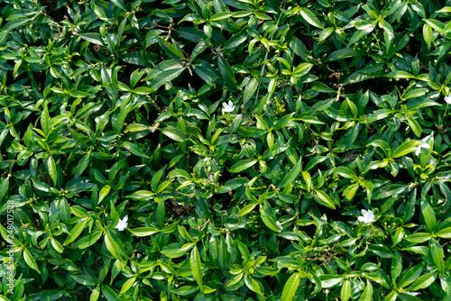 fototapeta na ścianę Green leaves pattern