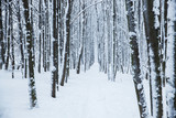 Many forest trees under snow - 248019931
