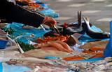 Fresh fish at a fish market in Nice, France - 248045196