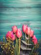 Beautiful tulips on dark green background
