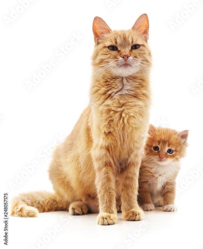 fototapeta na ścianę Cat with kitten.