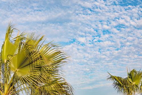Palmen unter blauem Himmel