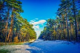 Fototapeta Natura - Path / road through a snowy forest in winter © akatjomar