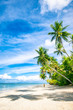 Quadro Bright scenic view of tall curving palm trees casting shadows on the shore of a deserted tropical island beach in Bahia, Brazil
