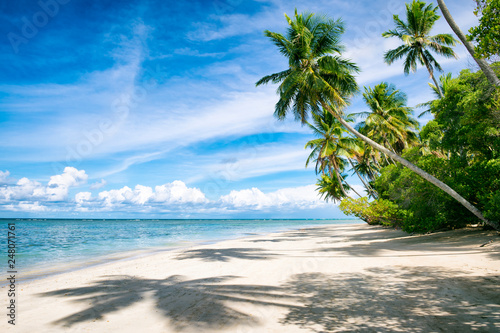 Foto Murales Palm trees casting shadows on a wide remote tropical Brazilian island beach in Bahia Nordeste Brazil