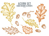 Vector collection of hand drawn pastel acorn
