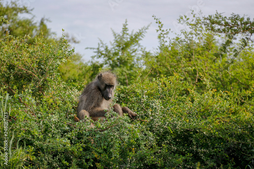 Kruger National park in South Africa © Junpei Suzuki