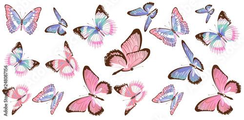 Leinwanddruck Bild beautiful pink butterflies, isolated  on a white