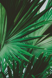 Palm Leaves. Vintage background. Retro toned poster. - 248092127