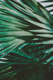 Palm Leaves. Vintage background. Retro toned poster. - 248092188
