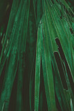 Palm Leaves. Vintage background. Retro toned poster. - 248092350