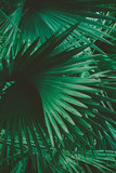 Palm Leaves. Vintage background. Retro toned poster. - 248092542