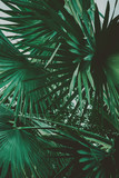 Palm Leaves. Vintage background. Retro toned poster. - 248092591