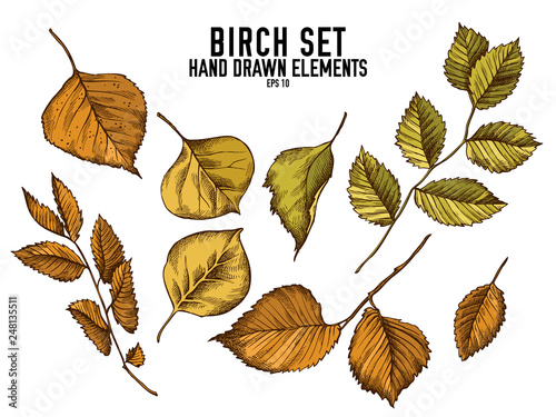 Vector collection of hand drawn colored  birch - 248135511