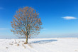 Lonely tree on the snow field.